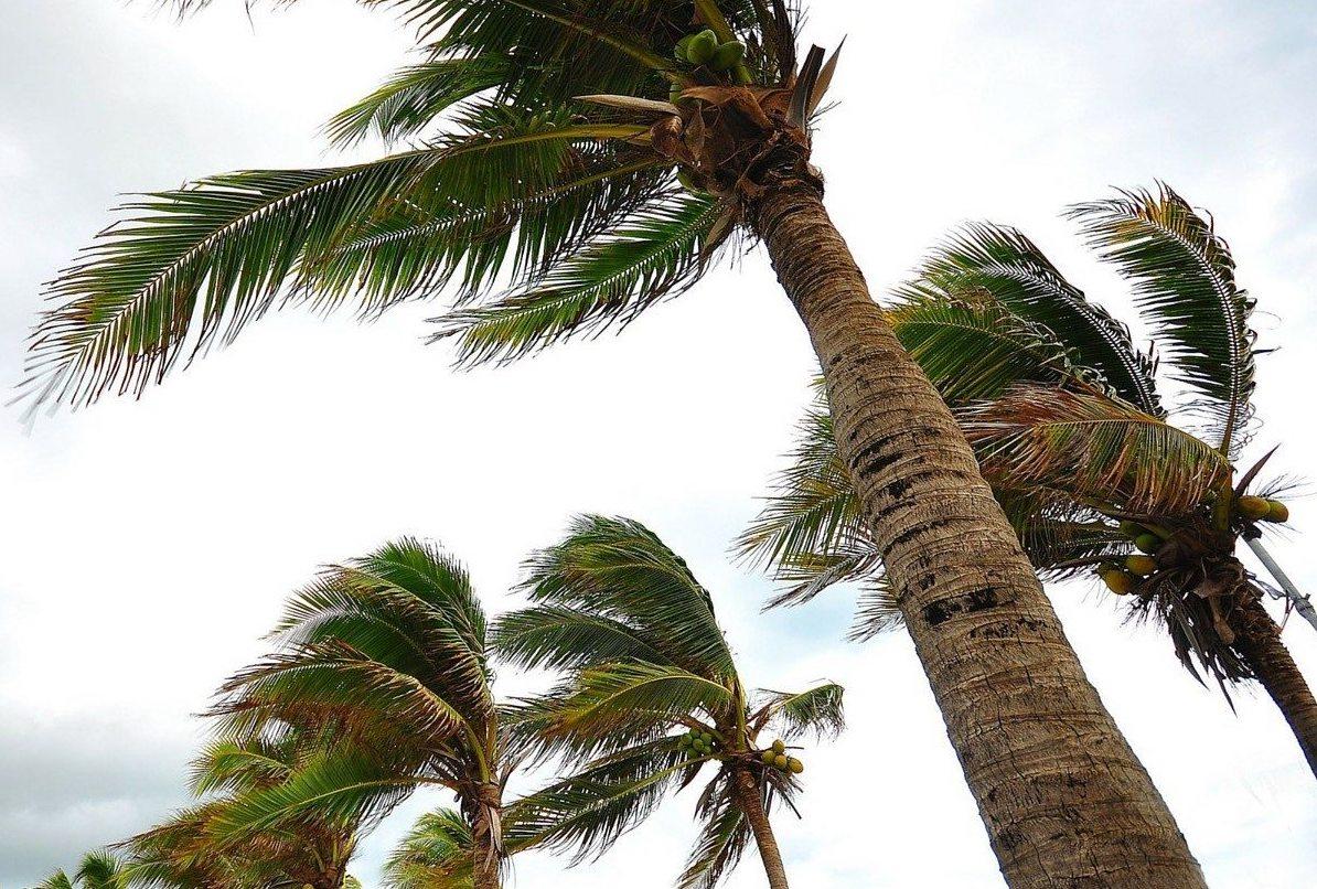 hurricane covid prep